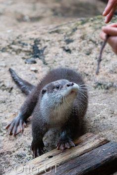 8 best otterly cute images wildlife park leo lion rh pinterest com