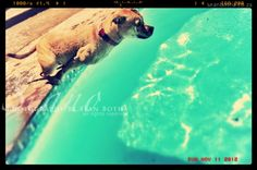 South African Artists, Polar Bear, Underwater, Creatures, Horses, Puppies, Fine Art, Cats, Prints