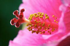 Close up flower 4
