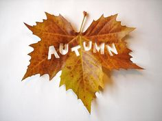A is for Autumn (fall, leaf, cutout) Seasons Of The Year, Best Seasons, Autumn Day, Autumn Leaves, Hello Autumn, Autumn Rose, Autumn Forest, Autumn Garden, Photo Vintage