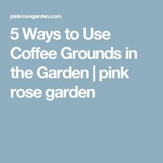 5 Ways to Use Coffee Grounds in the Garden   pink rose garden