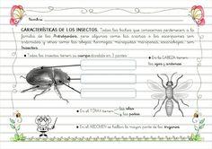 Características Insectos