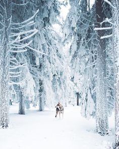 Winter in Swedish Lapland. Last winter we headed to the far North, for an adventure along glistening ice covered roads, through snow covered forests and past Winter Szenen, Winter Magic, Winter Christmas, Art Et Nature, Tier Wallpaper, I Love Snow, Snow Scenes, Winter Photos, Winter Beauty