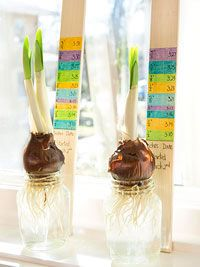 Think Spring! Springtime Crafts and Treats