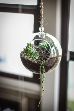 Terrariums What is a terrarium? The best definition for a terrarium is a mini indoor garden kept in a glass container. Terrarium's are perfect for those who have little time for gardening or just. Terrariums Diy, Hanging Glass Terrarium, Garden Terrarium, Garden Planters, Glass Terrarium Ideas, Succulent Terrarium Diy, Garden Boxes, Jardim Vertical Diy, Vertical Garden Diy