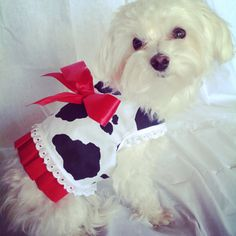Dog clothes Small dog dress cow pattern by LilyBellesDoggieDuds, $25.00