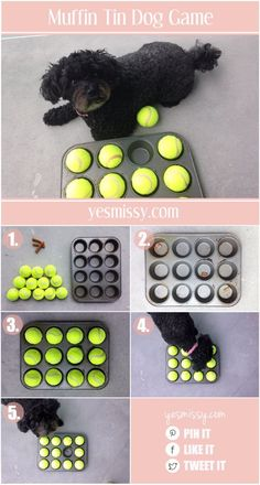 DIY Dog Hacks - Muffin Tin Dog Game - Training Tips, Ideas for Dog Beds and Toys, Homemade Remedies for Fleas and Scratching - Do It Yourself Dog Treat Recips, Food and Gear for Your Pet http://diyjoy.com/diy-dog-hacks