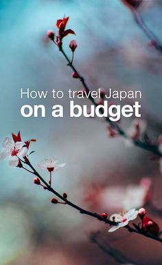 How to Travel Japan on a Budget: There are plenty of ways to experience Japanese culture on a budget. You can order sushi, take a class on bonsai, or read something (anything, really) by Haruki Murakami. To experience Japan in all its manga-loving, high-tech, Asian-Pacific glory, however, you have to go there. And if you need to travel on a budget, you'll have to do some planning.