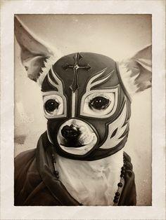We do lucha libre. Dachshund, Mexican Wrestler, Luchador Mask, Chicano Art, Chihuahua Love, Mexican Art, Mexican Menu, Famous Mexican, Mundo Animal