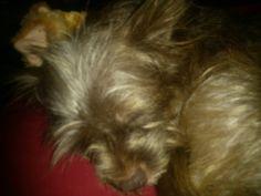 Cute dog sleeping.