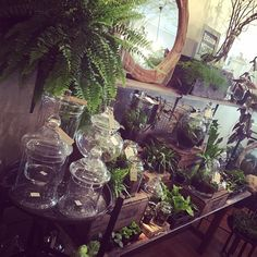 Need a break from the cold? Come visit us for Troy Night Out. We've captured a little summertime here in the studio...feel the warmth and breathe in the fresh air. #terrariums #houseplants #troynightout #troyny