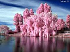 różowe jezioro - Szukaj w Google