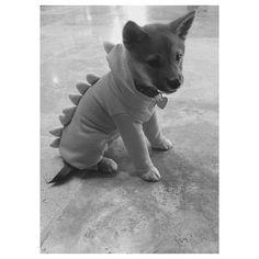 Ariana Grande's dog