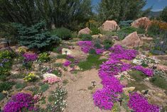 Colorado Xeriscape Demonstration Gardens | Pikes Peak Area Garden | boulders, evergreens, patches of ground cover, bright blooms.  Plants include silver blade evening primrose, sage, sedums, oregano, hens and chicks, cattail iris, edelweiss, pasqueflower, phlox, sumac, gayfeather, lead plant, fern bush and California fuchsia.