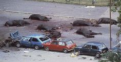 Seven horses of the Queen's Household Cavalry lie dead or dying after the IRA detonated a nail bomb The Hyde Park July 20 1982 Morris Marina, Irish Republican Army, The Ira, Rare Historical Photos, British Soldier, Military Personnel, Irish Men, Hyde Park, Police