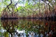 Turner River, Everglades National Park (Florida). Picture Yourself in Paradise at www.floridanest.com