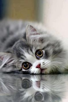 Cute little kitty missing someone.... click on picture to see more cute