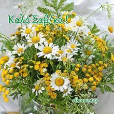 Καλημέρα-Καλό Σαβ/κο! (εικόνες) - eikones top Plants, Plant, Planets