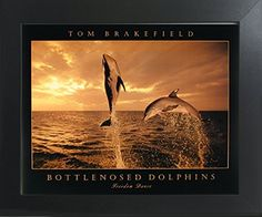 Bottlenosed Dolphins Freedom Dance At Ocean Sunset Wall D... https://www.amazon.com/dp/B01N4DTCNF/ref=cm_sw_r_pi_dp_x_ELgAzb29HYWS9
