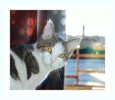 ✿Mon Amour de la photo qu'est ce ..✿:  #chats  #animaux #couleur #photographie