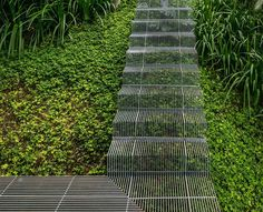 Low impact stairs that allow plants to grow below them