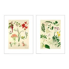 (Guest bedroom) IKEA - TVILLING, Poster, set of 2, Motif created by Cynthia Newsome-Taylor.The motifs have a common theme so you can easily create a collage. $6.99