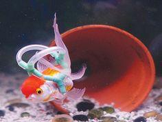 Ragazzo costruisce un giubbotto di salvataggio per il suo pesciolino che non sa nuotare