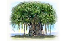 illustration, hanging roots