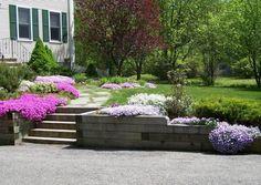plantes couvre sol fleuries: Phlox Subulata en violet, blanc et rose