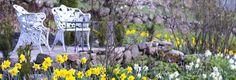 Vårträdgården. Ginstbuske vid ingången, påskliljor längs gången och hav med scilla på avstånd. Snödroppar.