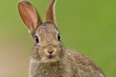 French town hunts mystery serial rabbit killer after 100 pets fall victim Wild Baby Rabbits, Wild Bunny, Wild Rabbit, Rabbit Head, Pet Rabbit, Soft Autumn Color Palette, White Rabbits, Serial Killers, Mystery