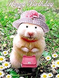 Happy Birthday my dear friend! Happy Birthday Art, Happy Birthday Pictures, Happy Birthday Messages, Happy Birthday Greetings, Birthday Blessings, Birthday Wishes Cards, Birthday Greeting Cards, Birthday Presents, Funny Hamsters