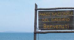 Servizio Civile, quattro volontari per il Parco del Gargano - https://blog.rodigarganico.info/2017/attualita/servizio-civile-quattro-volontari-parco-del-gargano-3/