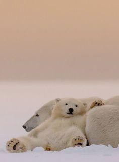 Chillaxin' polar bear