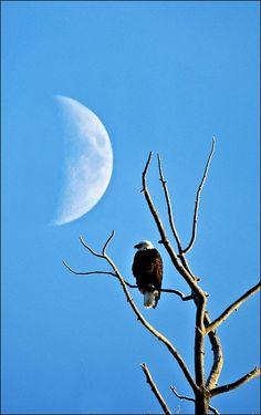 Eagle & Moon @Jan Brecher Lenga  Reminds me of the tree in Alaska!