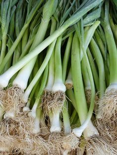 Leeks add such incredible flavor to a dish, and they are quite fun to grow. There are only a few factors that complicate growing leeks, and they are Fall Vegetables, Veggies, Bible Food, Calcium Rich Foods, Italy Food, Fruit Garden, No Cook Meals, Trees To Plant, Tips