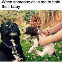 get that out of my face! | TrendUso #baby #babies #dog #dogs #puppy #puppies #cute #adorable #silly #aww #awww #funny #hilarious #humor #humorous #humour #meme #memes #memesdaily #lol #wtf #omg #rofl #relatable