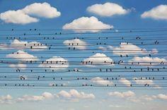 Concerto for birds, de Jared Lim