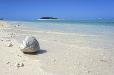 Coconuts on the seculded Fairfax Island on the Great Barrier Reef -  @jaxonark