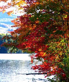 Vermont - fall foliage :)