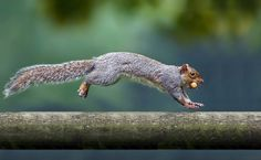jump by Gianluca Mariani Nature Photographer natura 2.8 on 500px