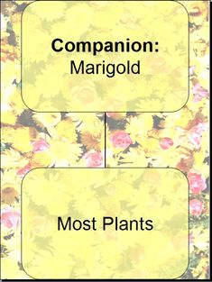 Marigolds produce a pesticide that deters nematodes, with some types of marigold this pesticide can stay in the soil for a year or longer even after the marigold itself is gone. marigolds also deter beetles, beet leaf hoppers, and more.