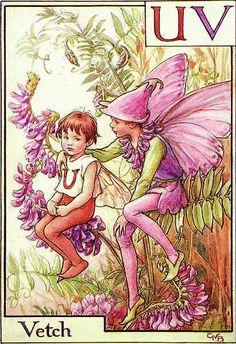 Цветочные феи и эльфы. Сесиль Мари Баркер.  Горо́шек, или ви́ка (лат. Vicia) — крупный род цветковых растений семейства Бобовые (Fabaceae).