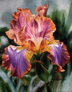 Iris II by Monika Pate Watercolor ~ 20 x 15