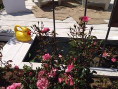 Progetto di Violarancio - water garden