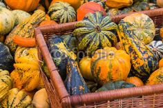 #Basket #Filled With #Various #Pumpkins @fotolia @fotoliaDE #fotolia #food #autumn #fall #colors #nature #austria #stock #photo #new download #portfolio #hires
