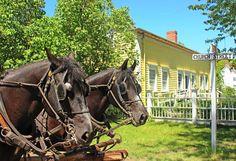 Wagon Horses at Upper Canada Village, Ontario