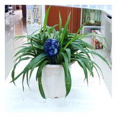 Globos de Riego Aqua Loon (pack de 2), ideal para regar las plantas de manera automática sin preocurpase por ellas
