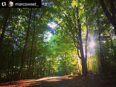 #Repost @marcsweet_  Evening hike down some old carriage roads #mohonkpreserve #hiking #trail