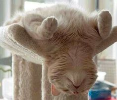 Sleeping  sssssttttt